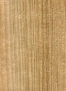 Eucalyptus QC